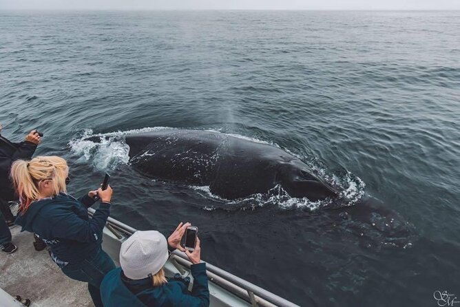 Summer Afternoon Whale Watch