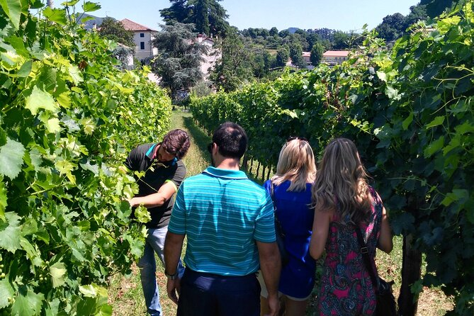 Wine Tour in the Euganean Hills