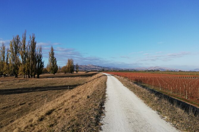 Self-Guided Scenic Bike Ride to Coastal Wineries from Napier