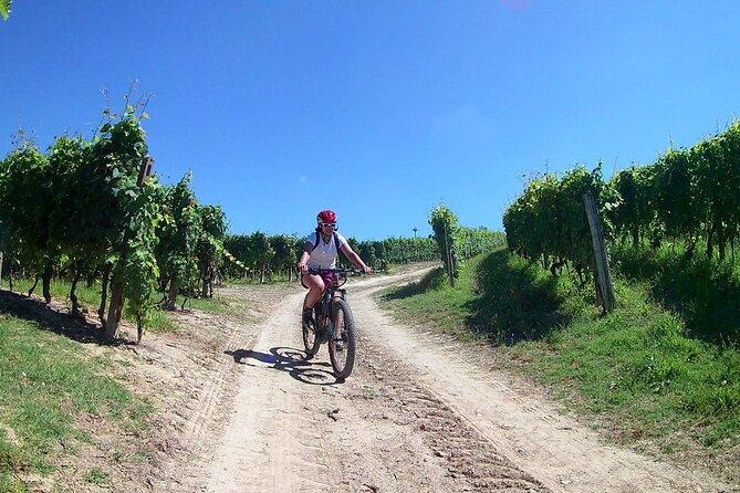 Barbaresco Bike Tour