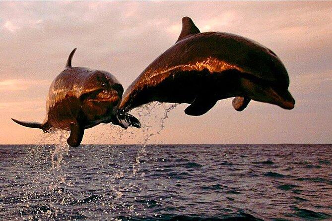 Happy Hour Dolphin Exploration Tour