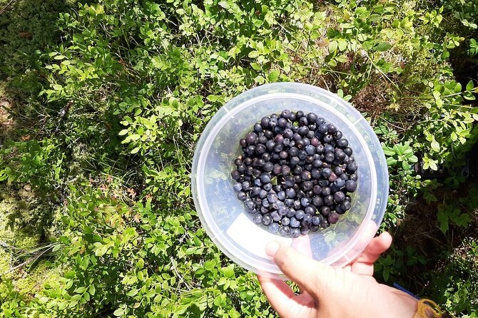 Berry picking and wildlife