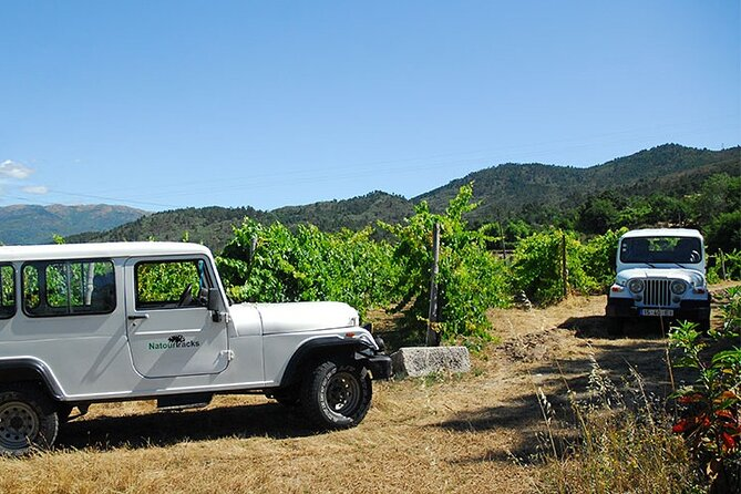 Tour de vinos en 4x4 en Quinta de Santa Cristina Vinho Verde Wine Estate