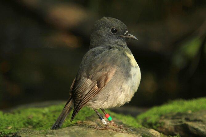 Croisière Early Bird Eco