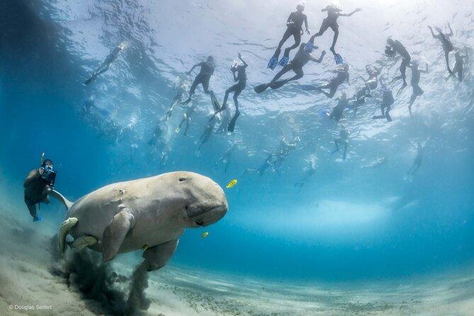 Abu Dabbab Beach - Snorkel with Turtles & Dugong - Marsa Alam