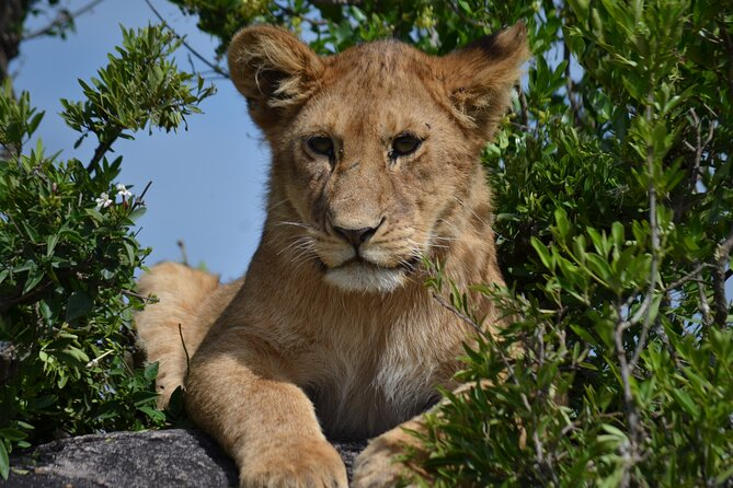 4 Days Camping Safari - Northern Tanzania