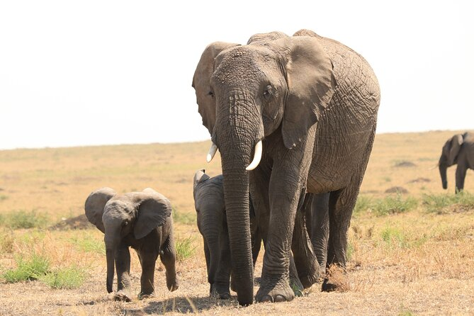 1-Day Safari-Trip to Tarangire National Park