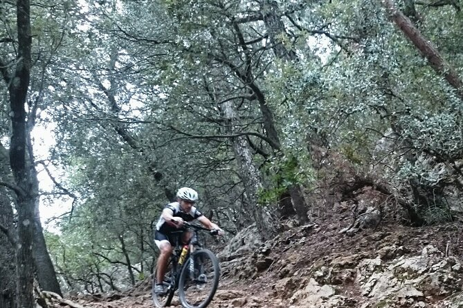 MTB guided tour in Bellver forest and Na Burguesa mountain