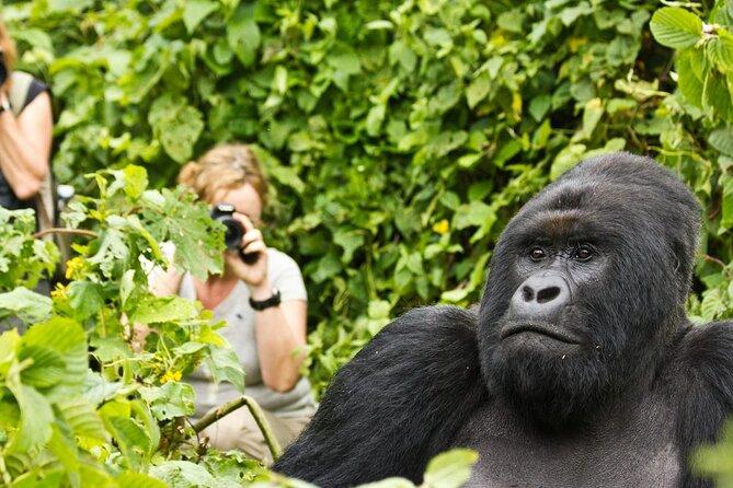 2-Day Gorilla Trekking in Rwanda, Twin Lakes & Cultural Tour