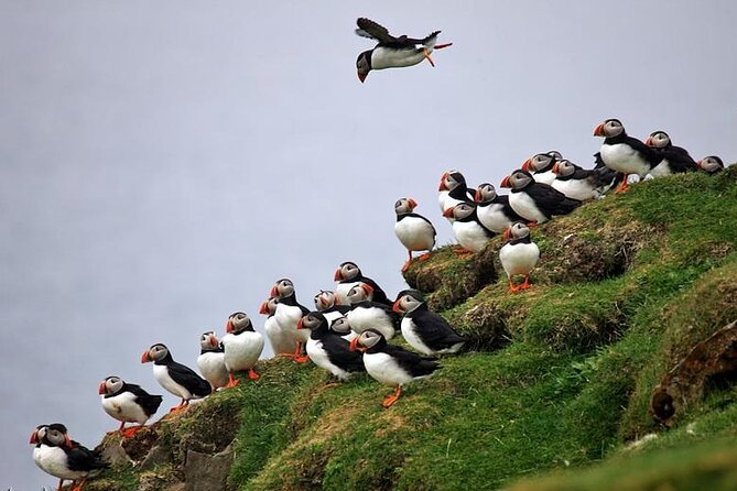 Full-Day Mykines Hiking Tour from Torshavn with Puffins