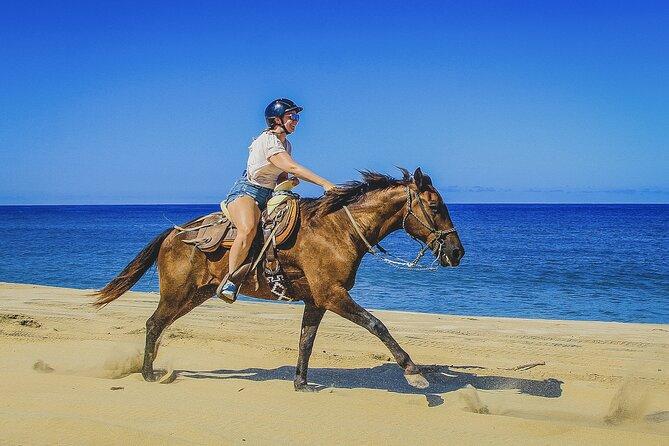 Cabo San Lucas Horseback Beach Ride: Intermediate and Advanced Levels