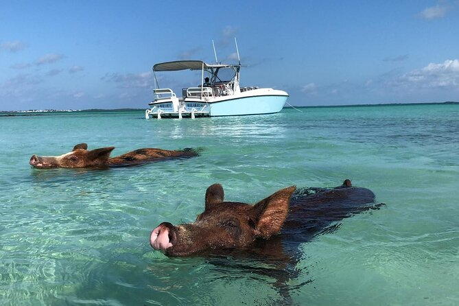 Swimming Pigs, Pink Sand Beaches & Snorkeling to Spanish Wells
