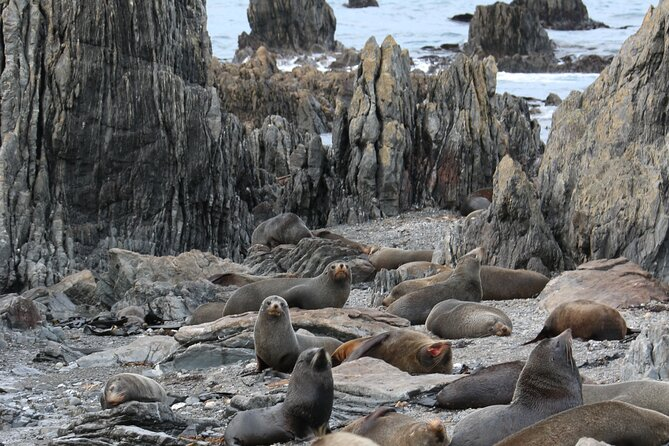Seal Colony Tour from Wellington
