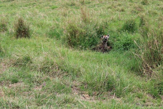 Hyena spotted in Maasai Mara