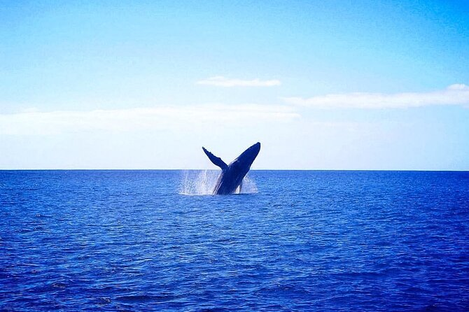 Whale Watching Experience in Waikiki