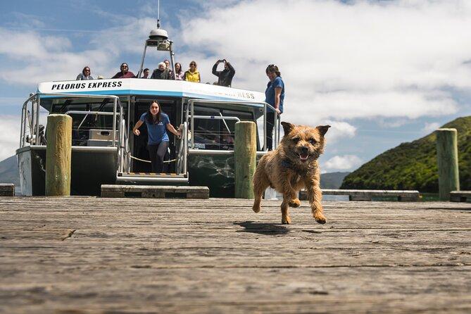 Full Day Marlborough Sounds Mail Boat Cruise