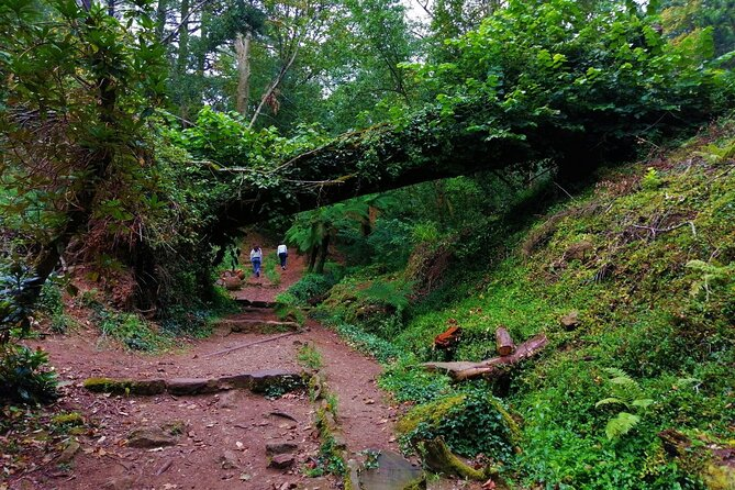 Bussaco Forest Walking Experience