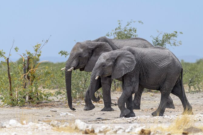 6 Day - Taste of Namibia