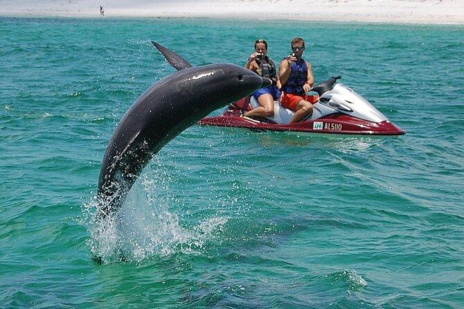 Crab Island Dolphin Watch Jet-Ski Tour