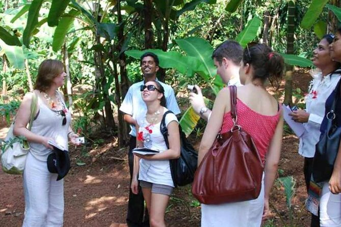 Half Day Village Backwater Country Boat Cruise : Group Tour from Fort Cochin