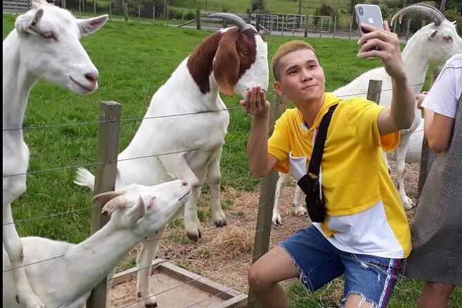 The Farm Tour