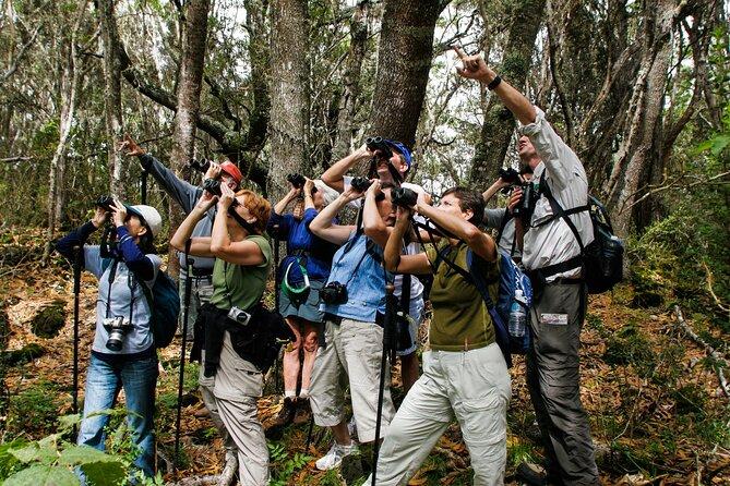 Full-Day Hakalau Forest Reserve Bird Watching Adventure