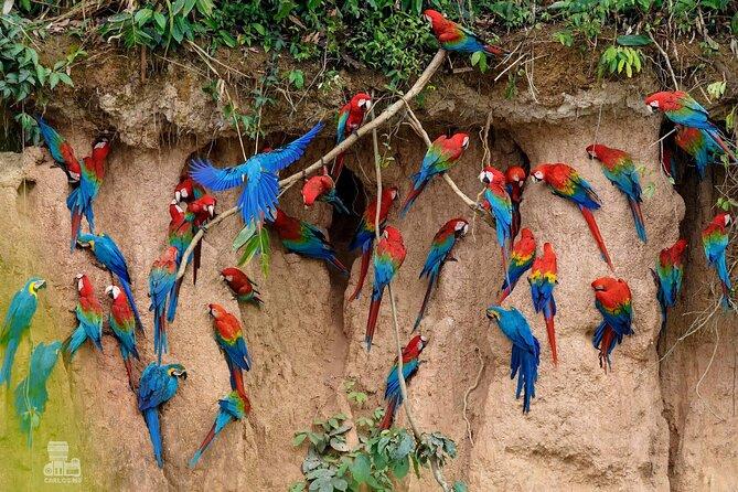 Macaw Collpa & Sandoval Lake 4 Days / 3 Nights