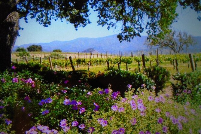 6 + Hour private Wine Tour in Santa Barbara County with Picnic lunch ..