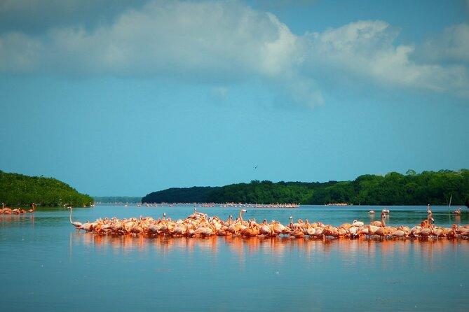 Flamingo Watching Private Tour to Celestun Biosphere Reserve
