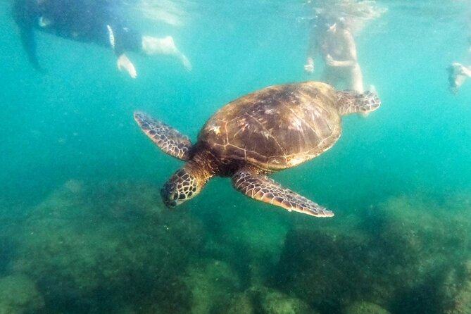 Full-Day Private Tour of North Shore Beaches