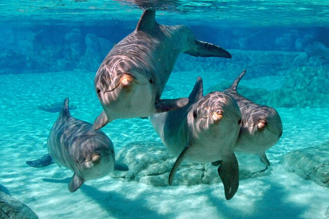 Miami: Key West with Dolphin Snorkel Tour