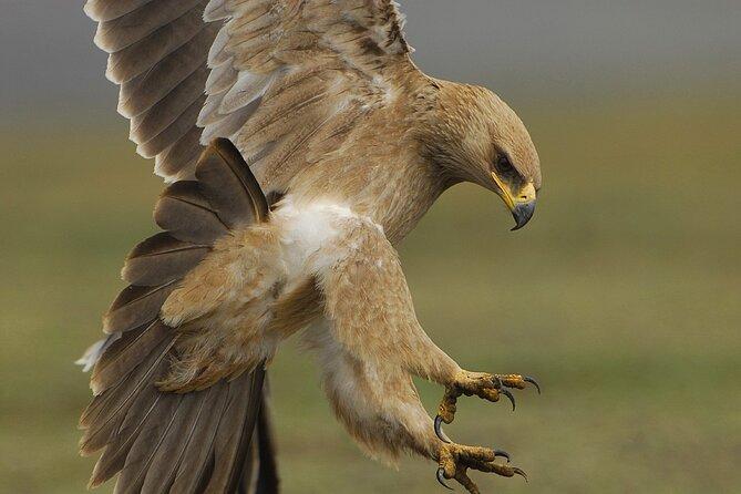 Ethiopia Bird watching Tour