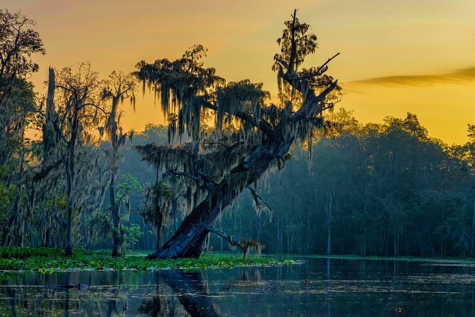 5-Day Louisiana Cajun Country Private Adventure