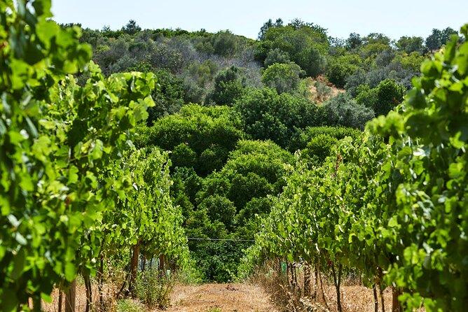 Wine Tasting Tour in Algarve Winery