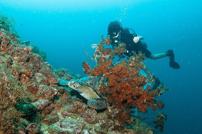 Scuba Diving Vallarta Undersea