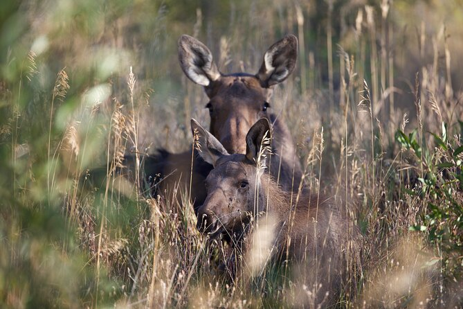 Wildlife Tours in Rocky Mountain National Park