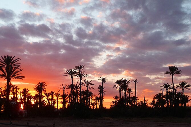 Sunset Camel Ride in Palm Groves with Tea Break