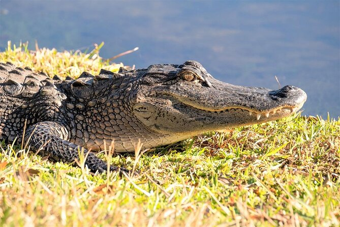 How to Spend 1 Day in Everglades National Park