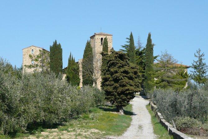 Escursione guidata in Toscana con pranzo e degustazione di vino e olio d'oliva
