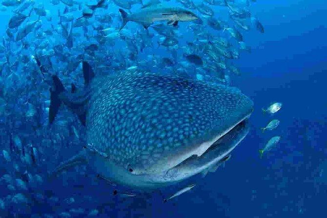 Koh Tachai Scuba Diving daytrip