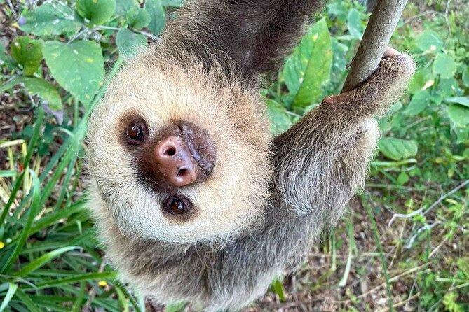 Sloth Sanctuary WildLife Hike