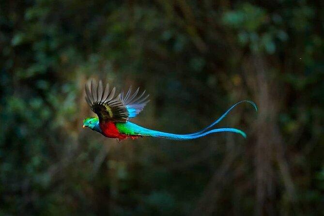 El Quetzal Birdwatching Tour from Cobán - Guatemala´s National Bird
