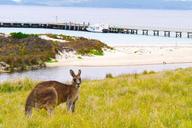 Maria Island Cruise + Walk. Renowned day tour with drinks and guided walk