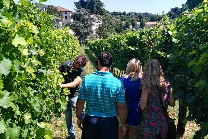 From Padua, Wine Tour in the Euganean Hills