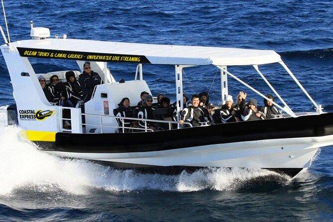 Mooloolaba Whale Watching Tour