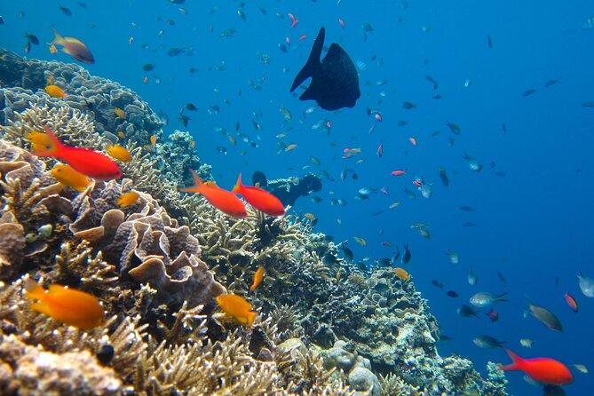 Cozumel Reef Snorkeling Tour