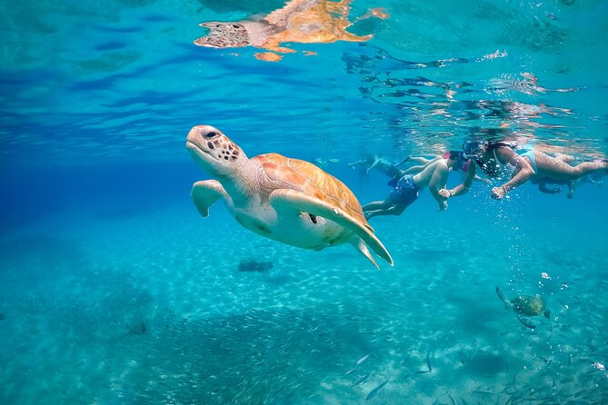 Snorkel with Turtles, Rose Island, Gilligan's Island and Fishing Tour