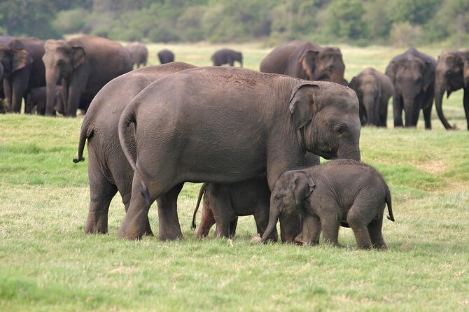 2 Day Tour to Minneriya & Wilpattu National Park From Colombo