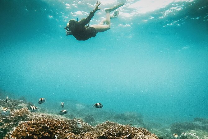 Snorkeling Tour in Caño Island with Lunch
