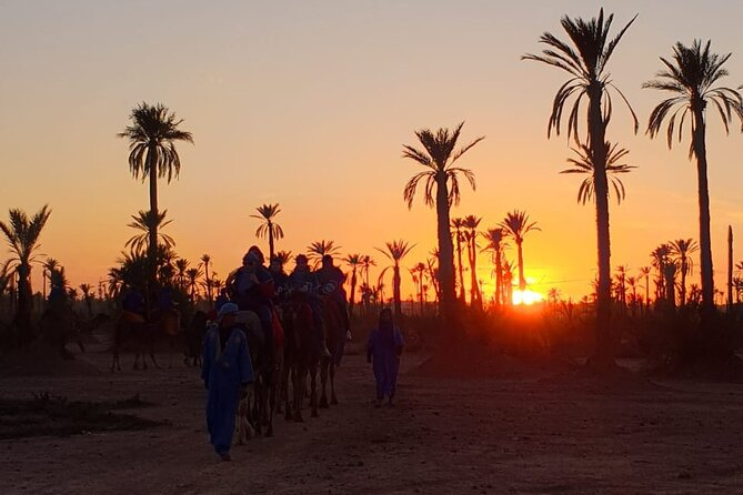 Sunset Camel ride Marrakech at the Palmeraie